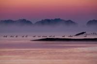 Die Elbe am Morgen