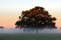 Morgenenbel in der Elbtalaue