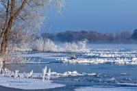 Die Elbtalaue im Winter