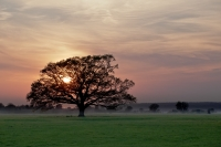 Sonnenuntergang in der Elbtalaue